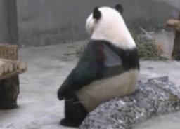 yuqiang